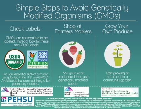 GMO Infographic (front)